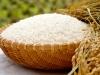 魚沼産コシヒカリが混ざっているお米みたいで美味しくないのは、なぜ?